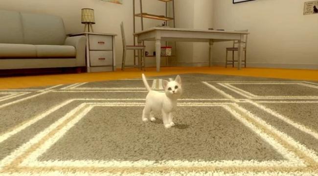 With My CAT – Gặp gỡ và tương tác với những chú mèo con độc đáo