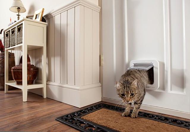 cat_door.jpg