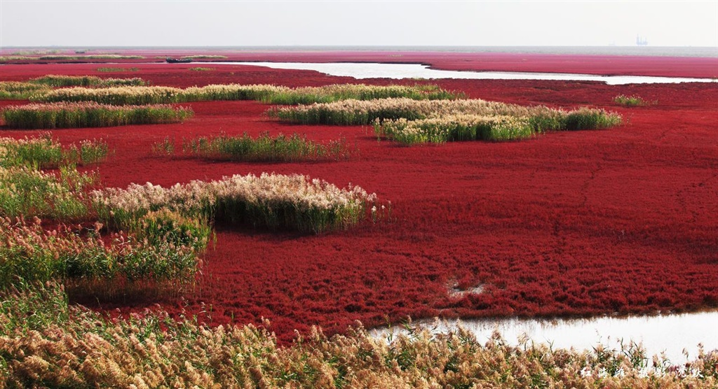 red-beach (2).jpg