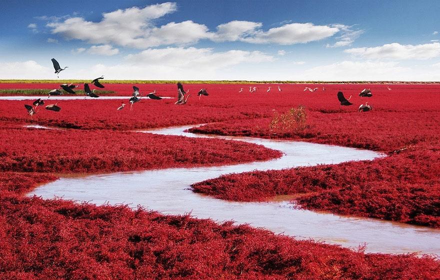red-beach (3).jpg