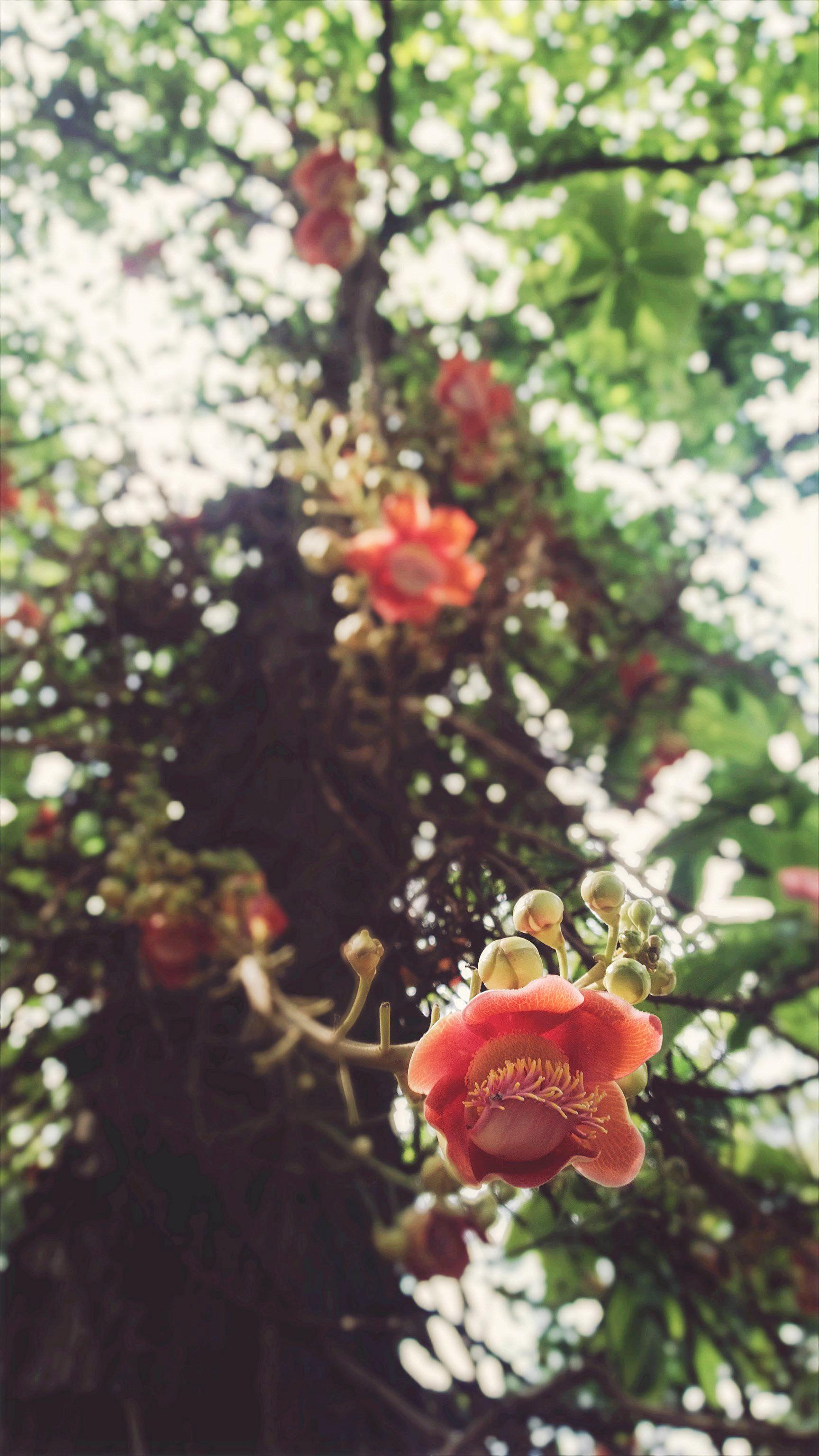 flower-1_15802662137_o.jpg