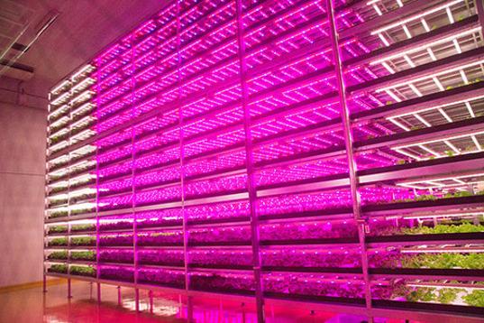 GE-Mirai-Lettuce-Farm-1.jpg