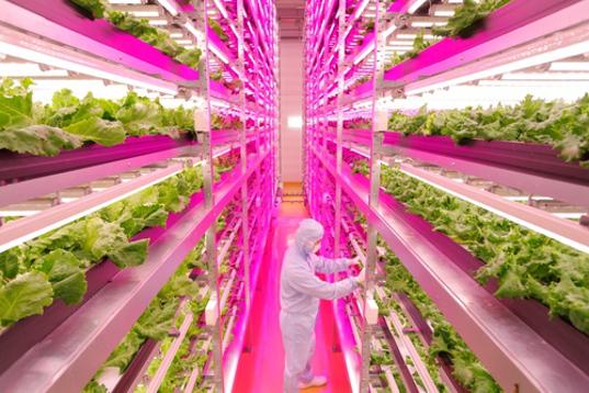 GE-Mirai-Lettuce-Farm-5.jpg