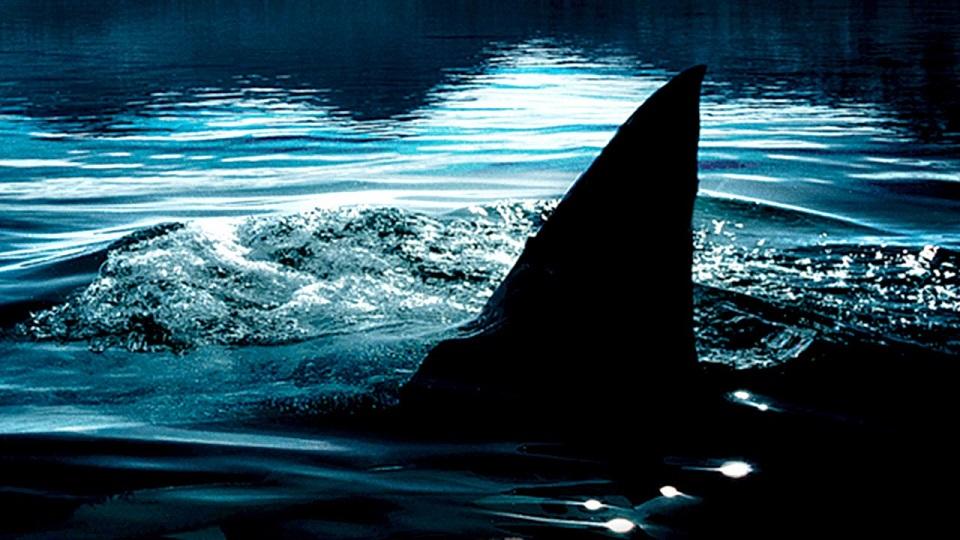 shark lake.jpg