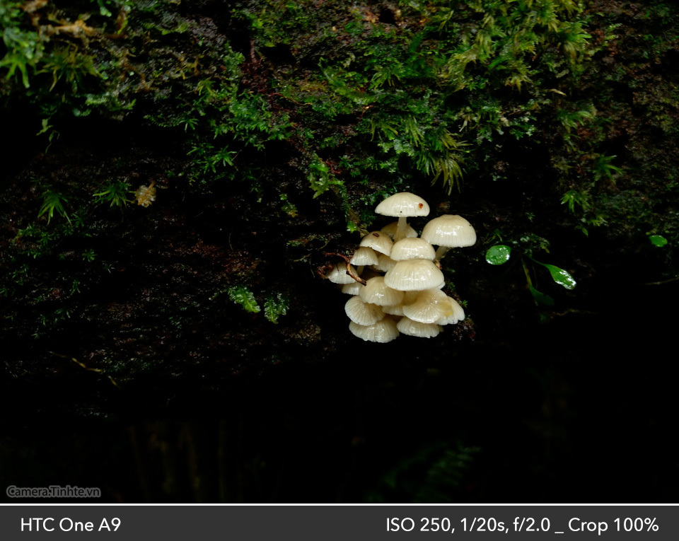 Camera Tinh Te_HTC A9_IMAG0655_960.jpg