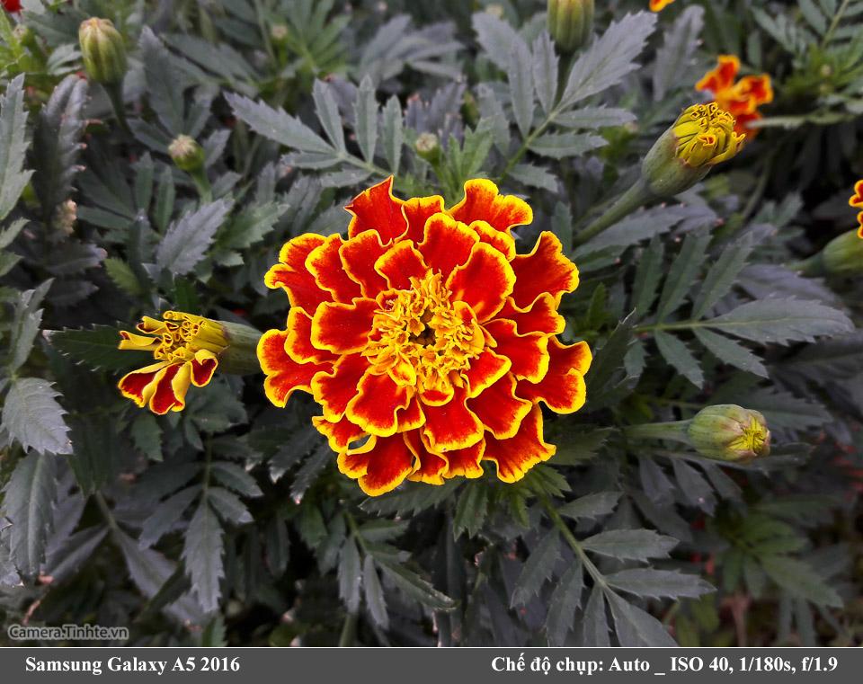Camera-Tinh-Te_Samsung-Galaxy-A5-2016_20160205_083546.jpg