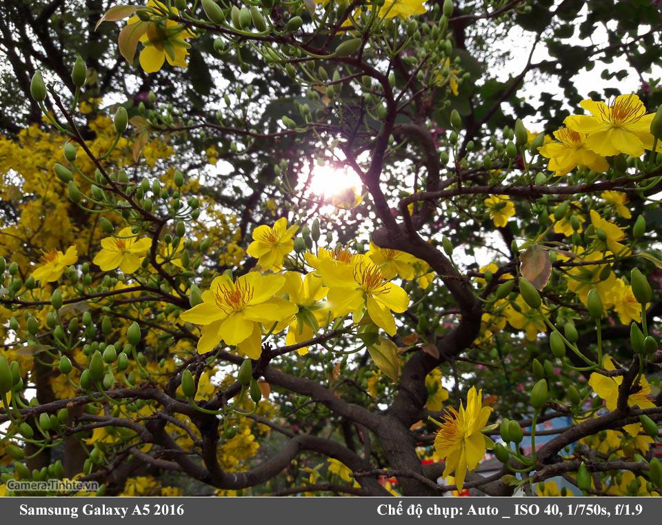 Camera-Tinh-Te_Samsung-Galaxy-A5-2016_20160205_084138.jpg