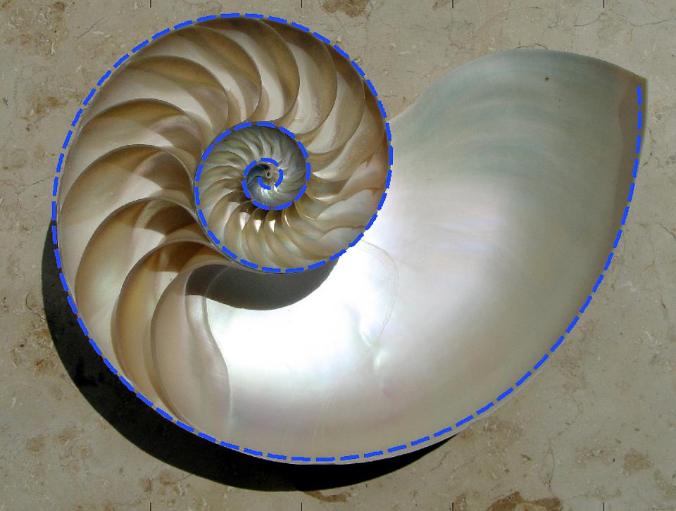 Nautilus_Cutaway_with_Logarithmic_Spiral.jpg