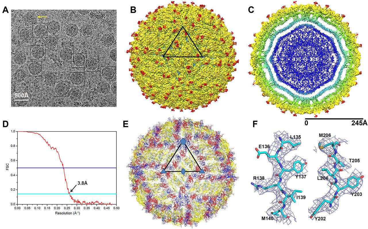 Virus_Zika_Tinhte_1.jpg