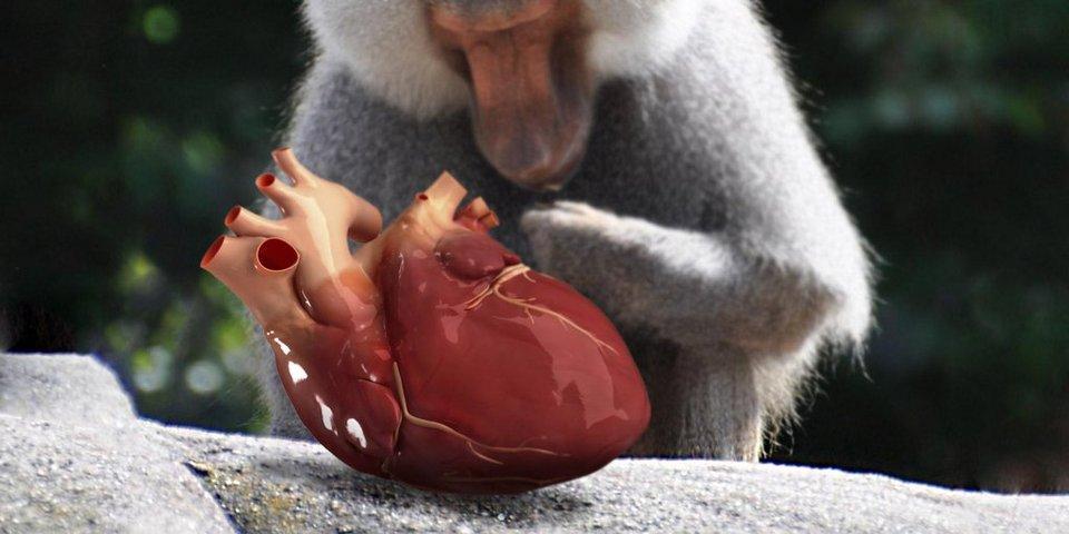 khỉ-đầu-chó_tinhte.jpg