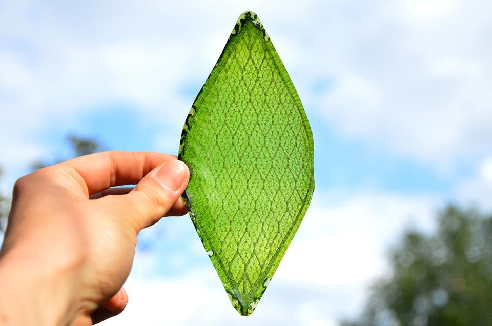 4-artificial-leaf-julian-melchiorri-1.jpg