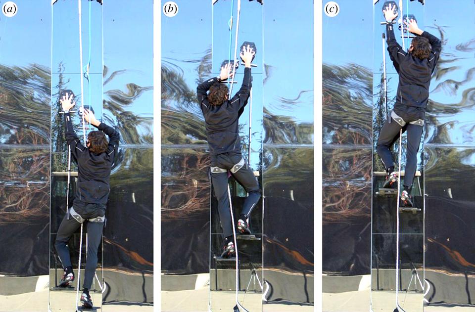 5-gecko-climbing-gear-1.jpg