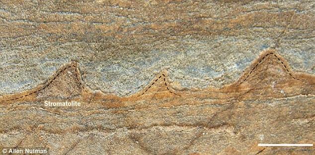 Stromatolite.jpg