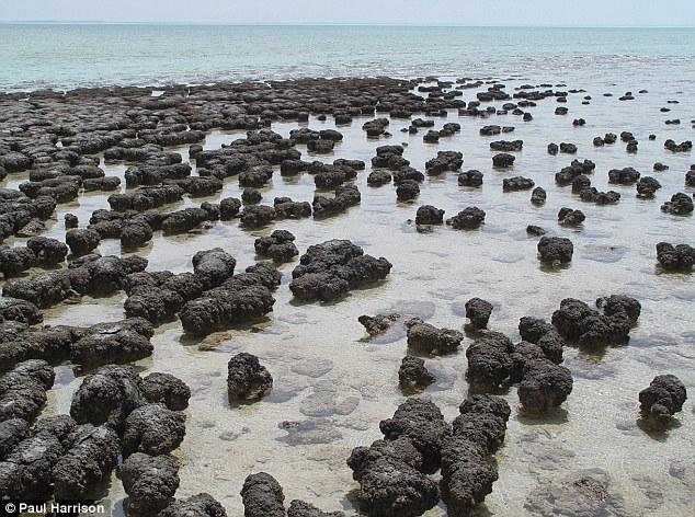 Stromatolite_gần_bờ.jpg
