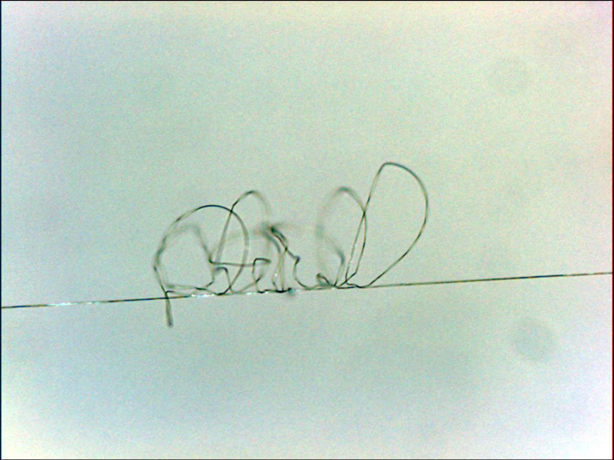 Tơ nhện siêu bền 2.jpg