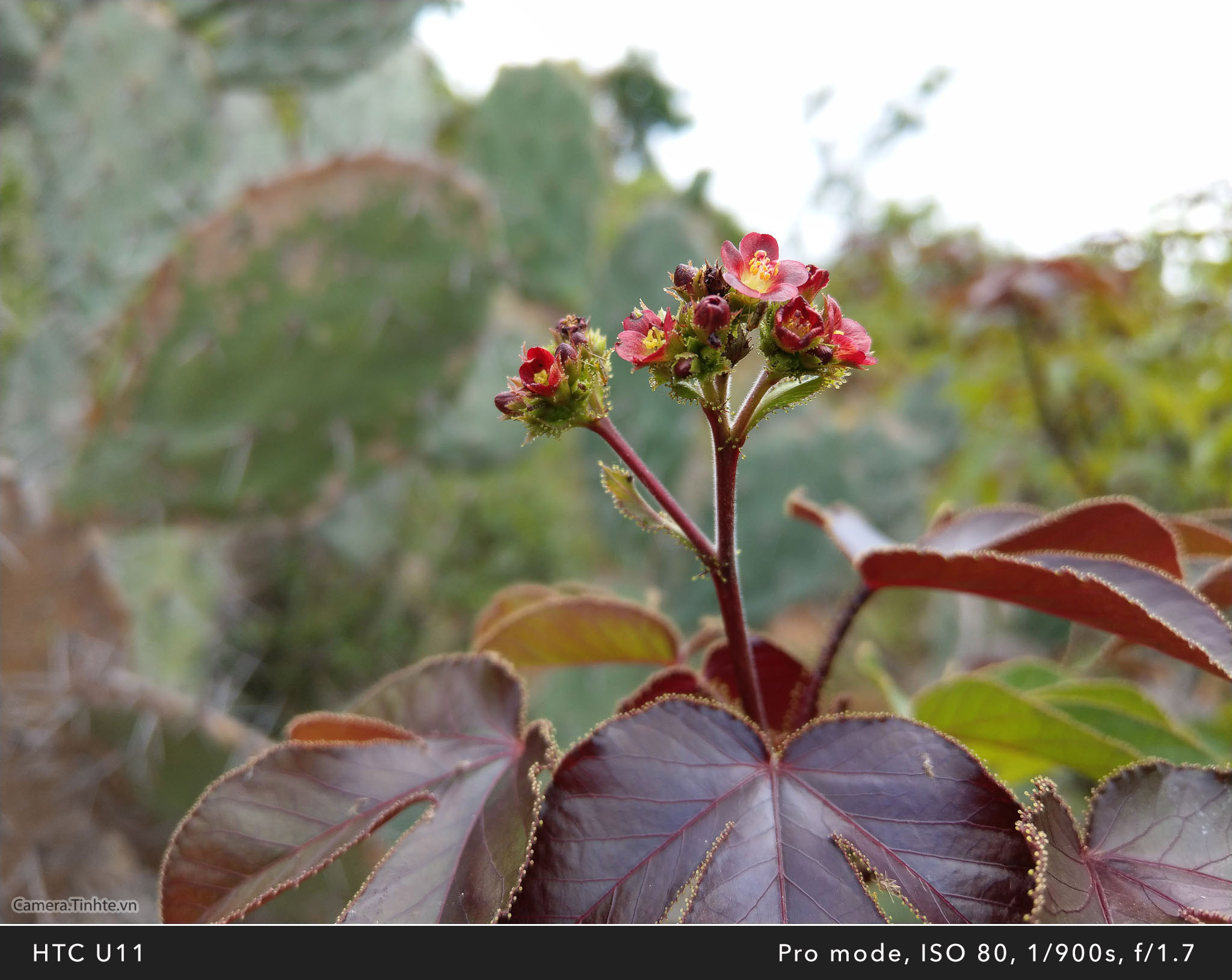 Camera.Tinhte_HTC U11_Macro_IMAG0461.jpg
