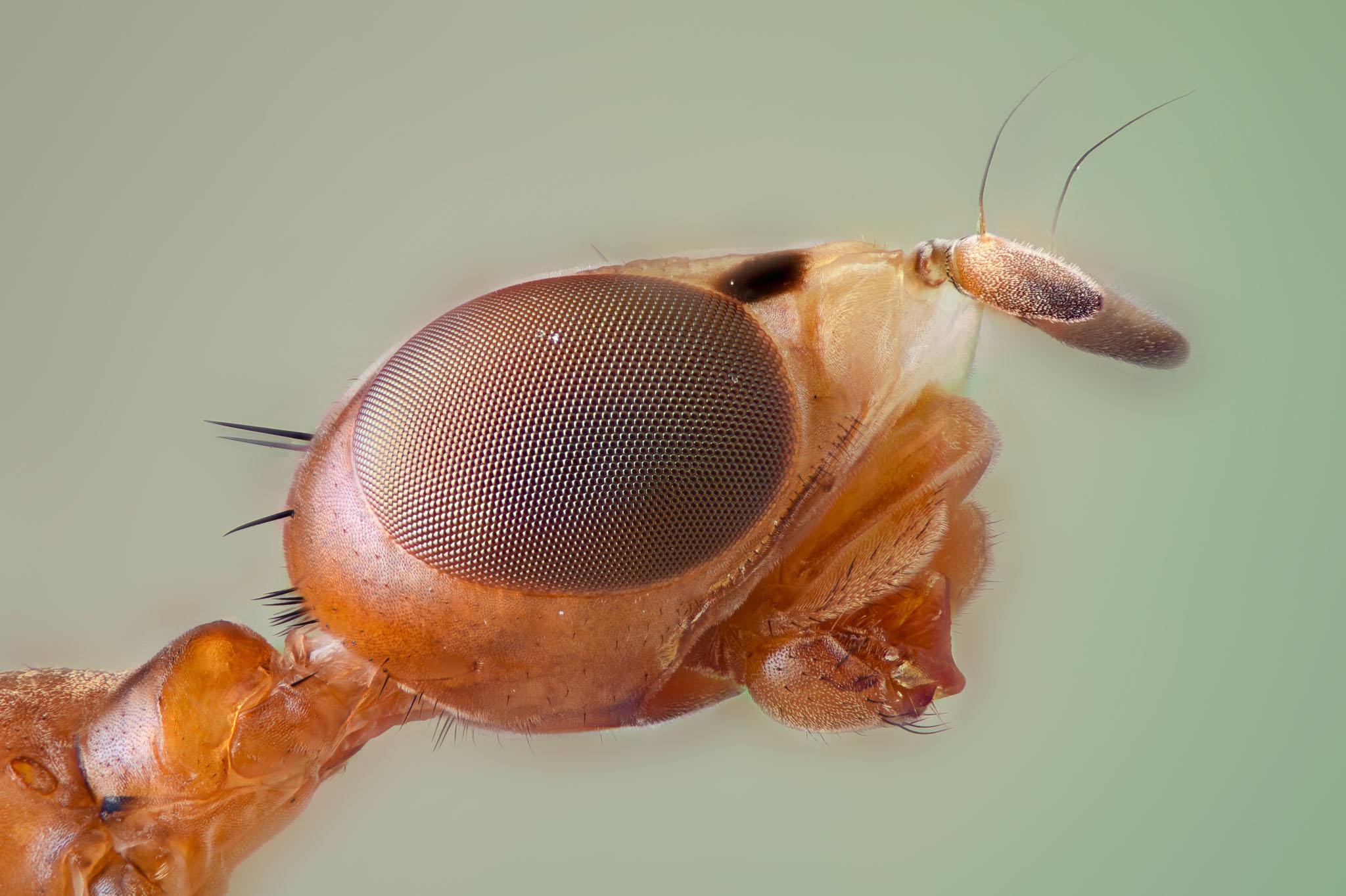 cameratinhte-Shilt Legged Fly.jpg