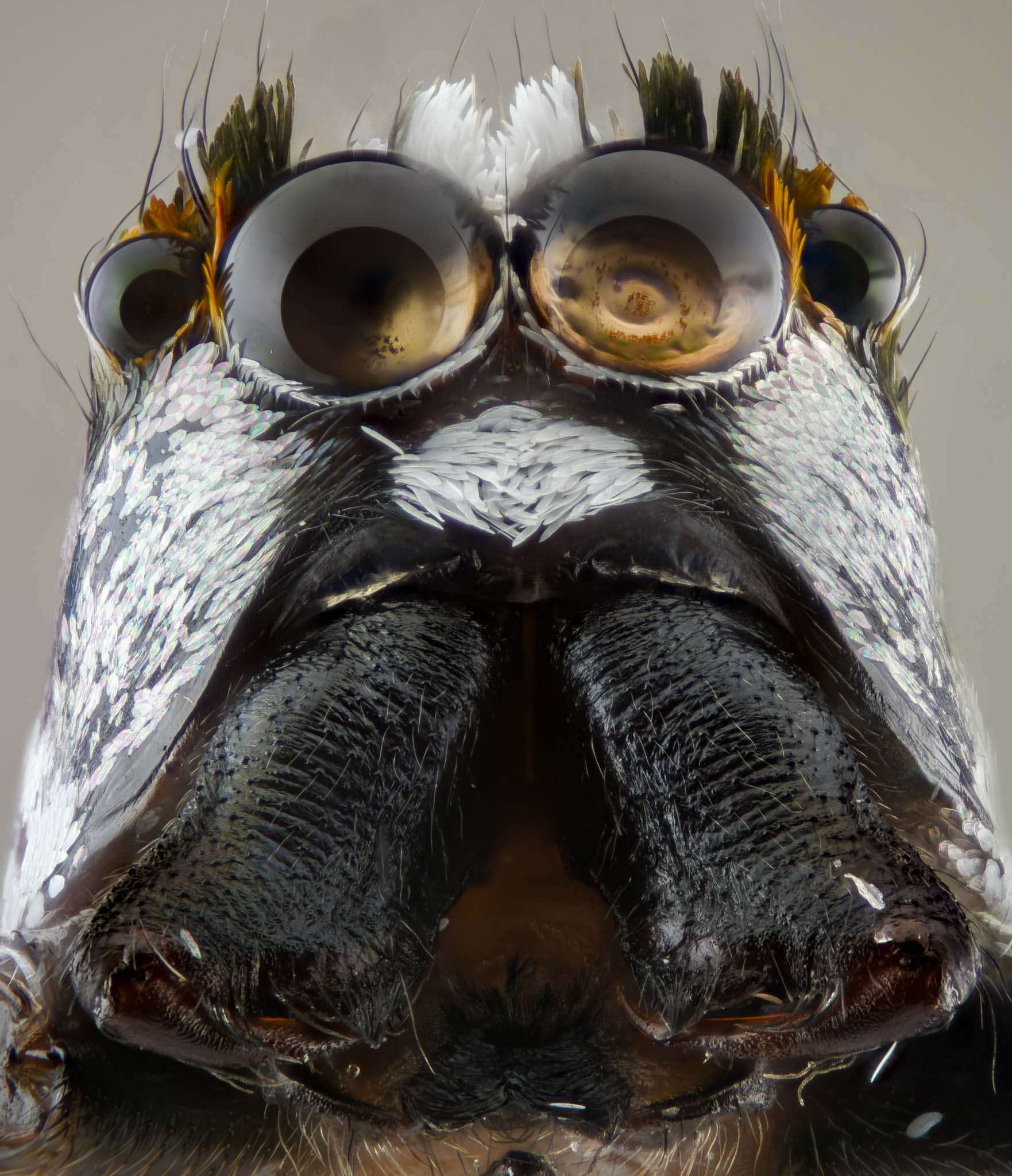 cameratinhte-Spider Portrait.jpg