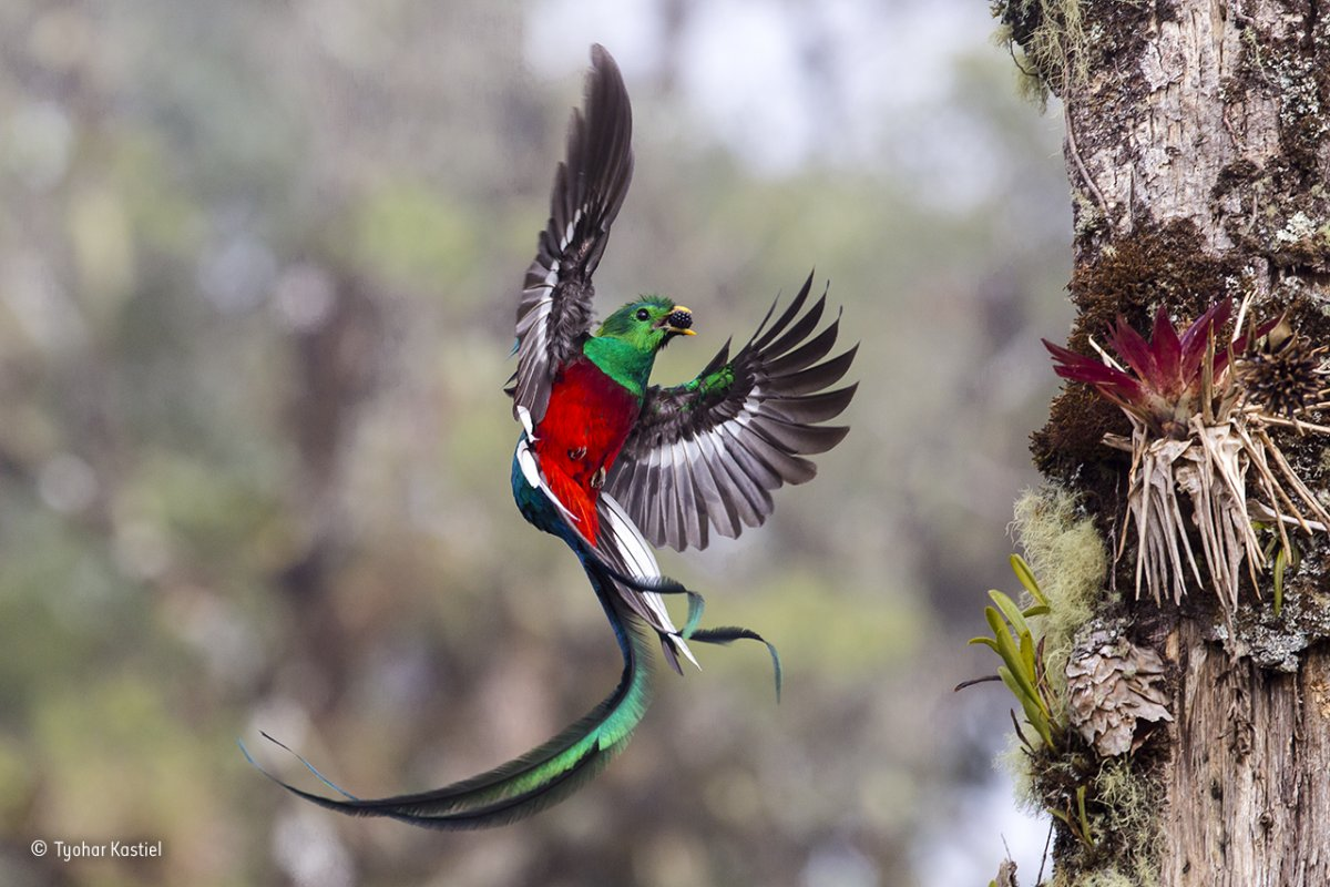 Wildlife Photographer of the Year 2017 Tinhte_5.jpg