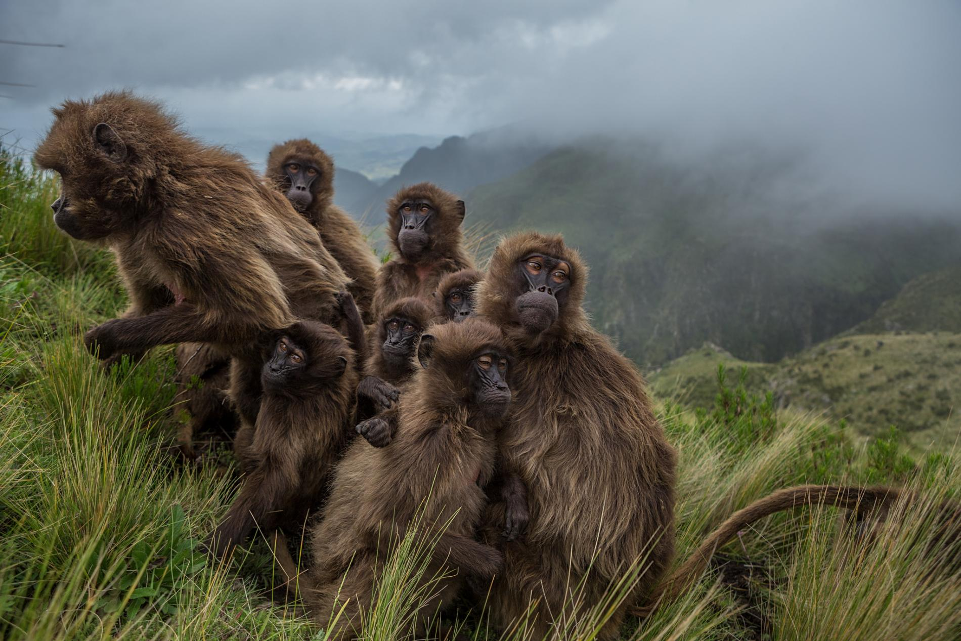 57 Pictures of the year - Natgeo - Tinhte.vn 16.jpg