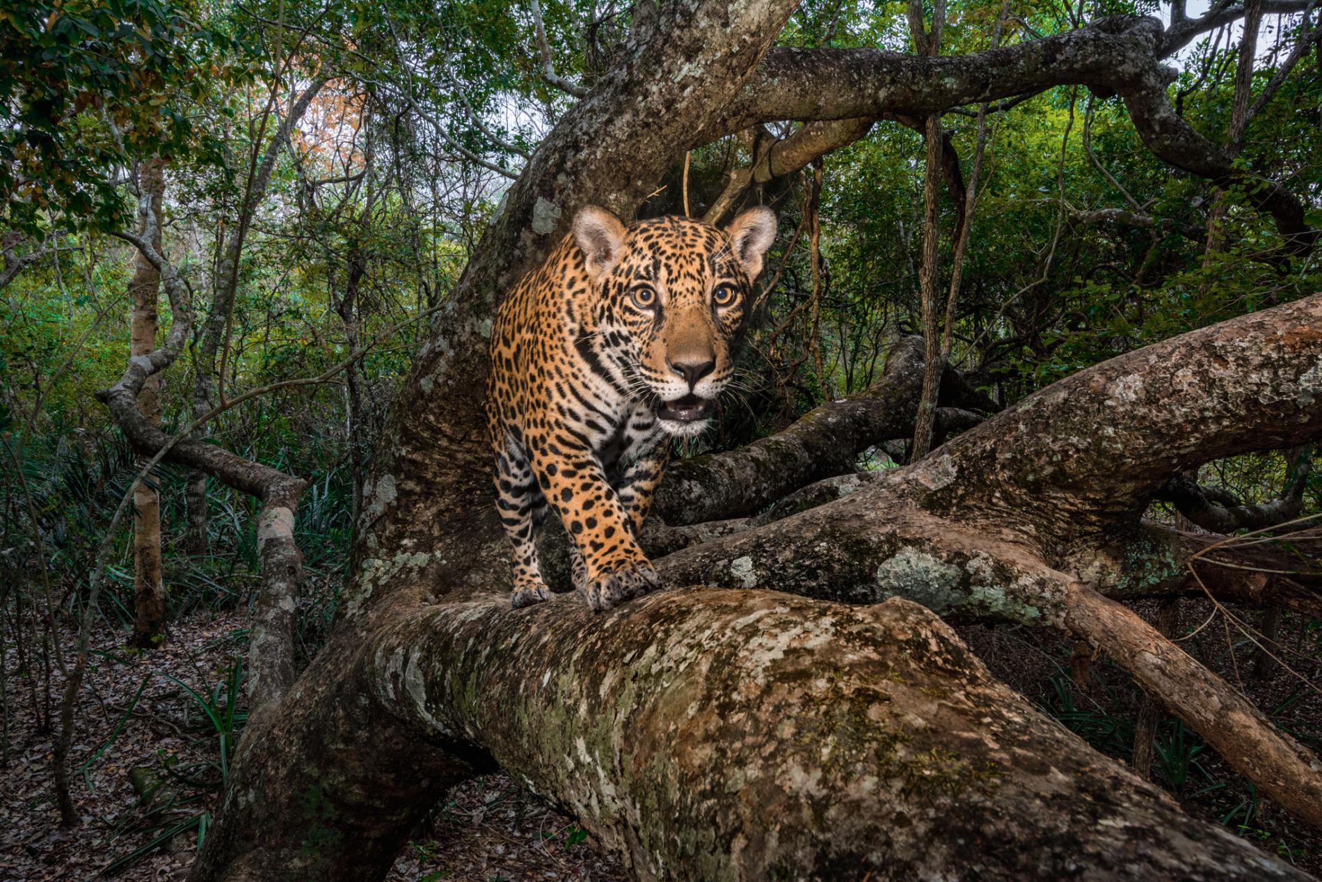 57 Pictures of the year - Natgeo - Tinhte.vn 27.jpg