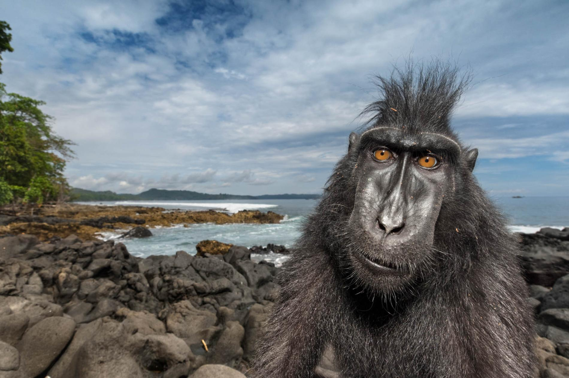57 Pictures of the year - Natgeo - Tinhte.vn 50.jpg