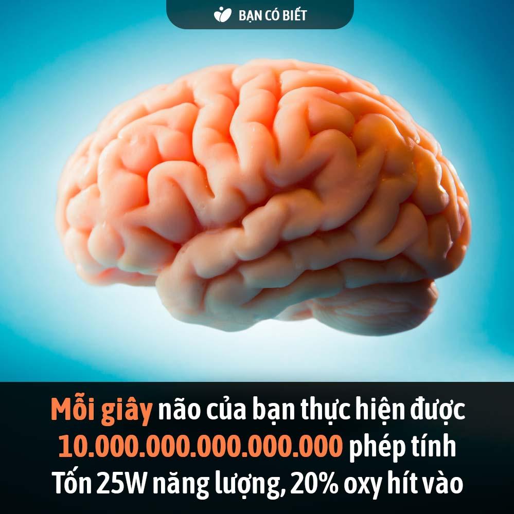 fact2_nao.jpg