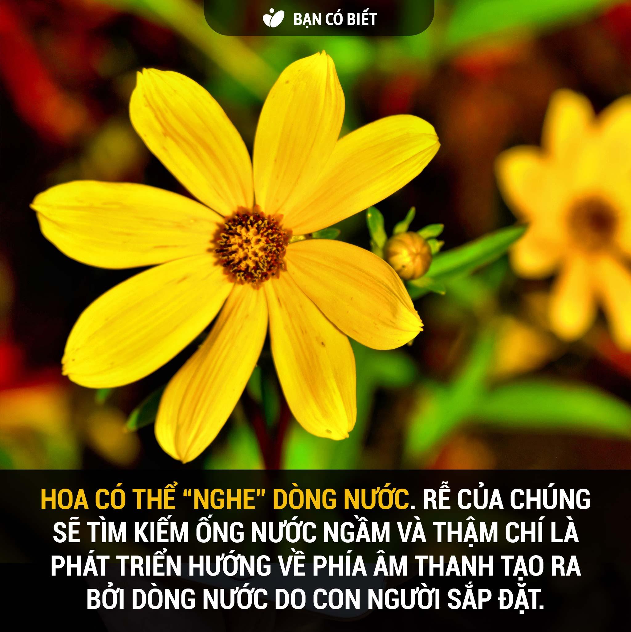 fact2_hoa_nghe_nuoc.jpg