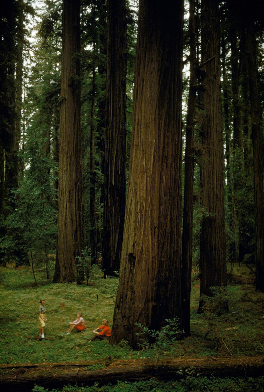 39-eureka-california-giant-trees.adapt.1190.1.jpg