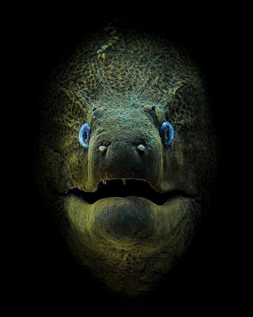 underwater-photography-contest-2.jpg