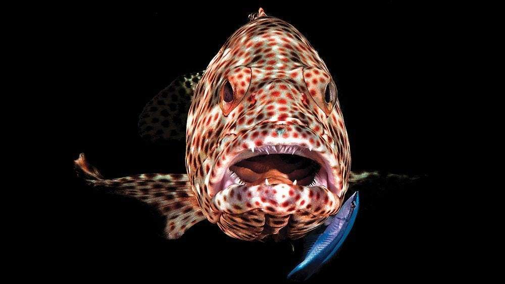 underwater-photography-contest-11.jpg