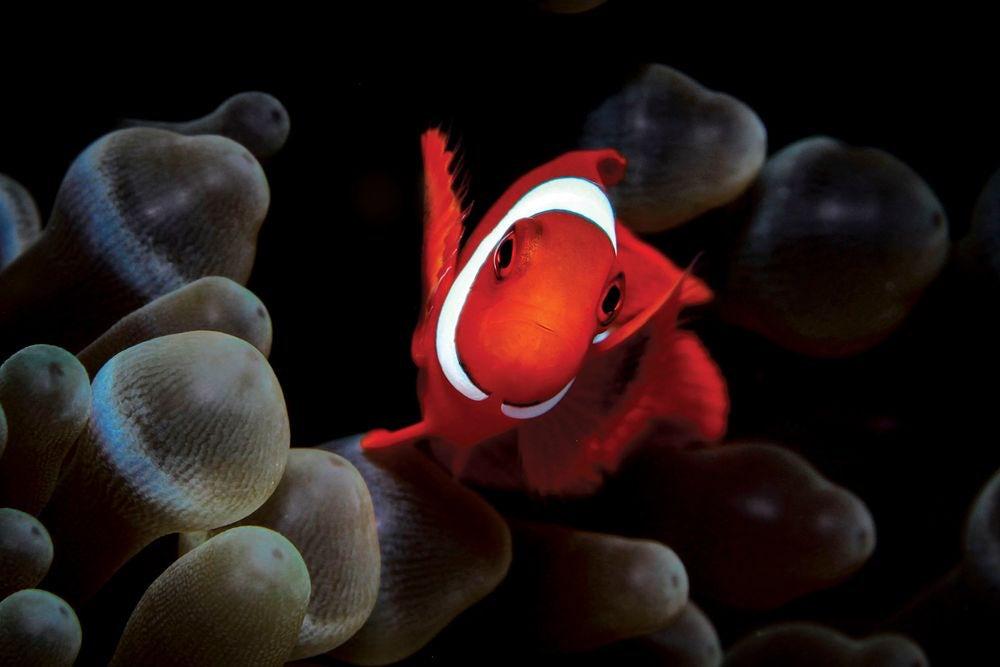 underwater-photography-contest-12.jpg