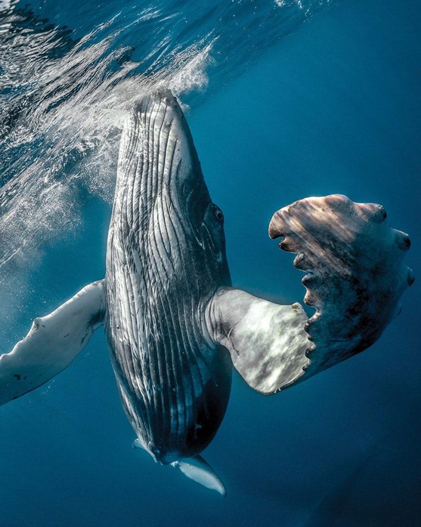 underwater-photography-contest-17.jpg