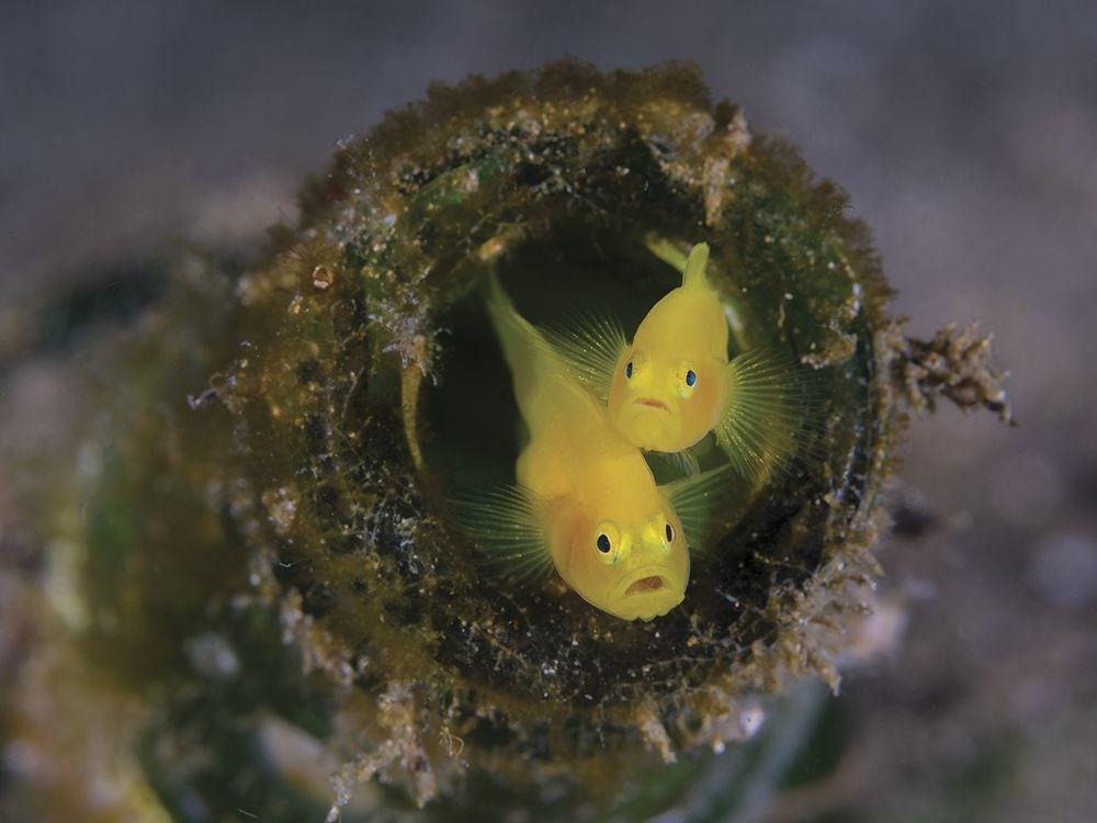 underwater-photography-contest-22.jpg