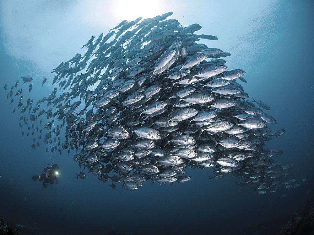 underwater-photography-contest-25.jpg