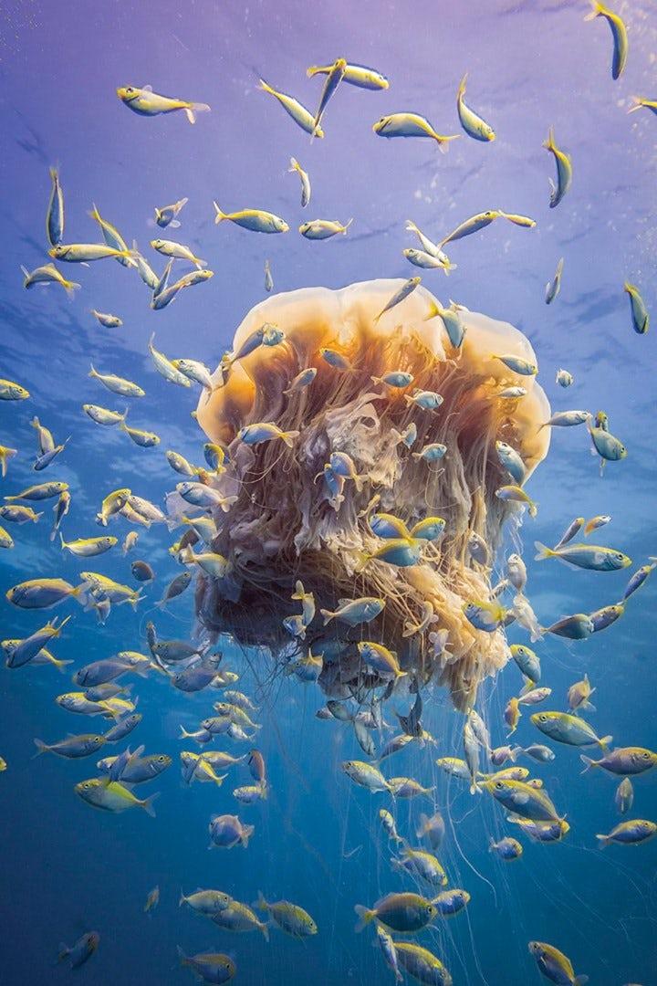 underwater-photography-contest-27.jpg