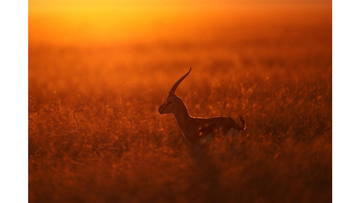 antelope-silhoette-in-the-sunset-orange-gradient-benefit-2-0a9a4250_239761109023821.jpg