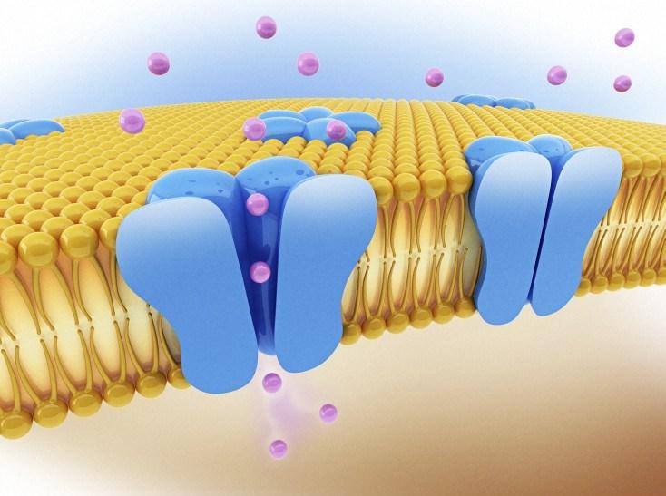 WC-FEATURE-Membrane-CHANNEL-.jpg