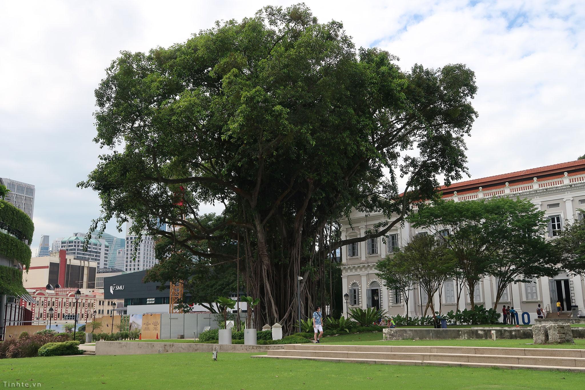tinhte_bao_tang_quoc_gia_singapore_2.jpg