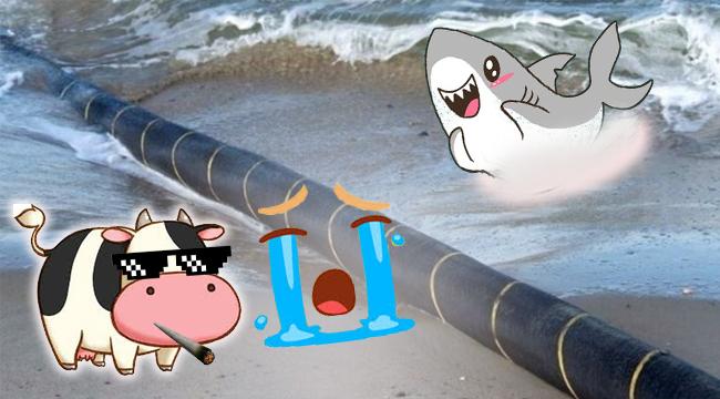Buồn của cáp quang: Biển khơi cá mập cắn, đất liền bò xới tung