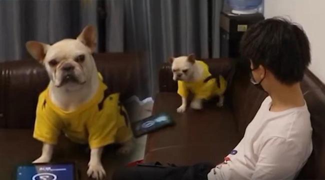 Bị chủ phá khi chơi game, chú chó hất văng iPad rồi quay sang lườm nguýt, đập ghế đầy thái độ